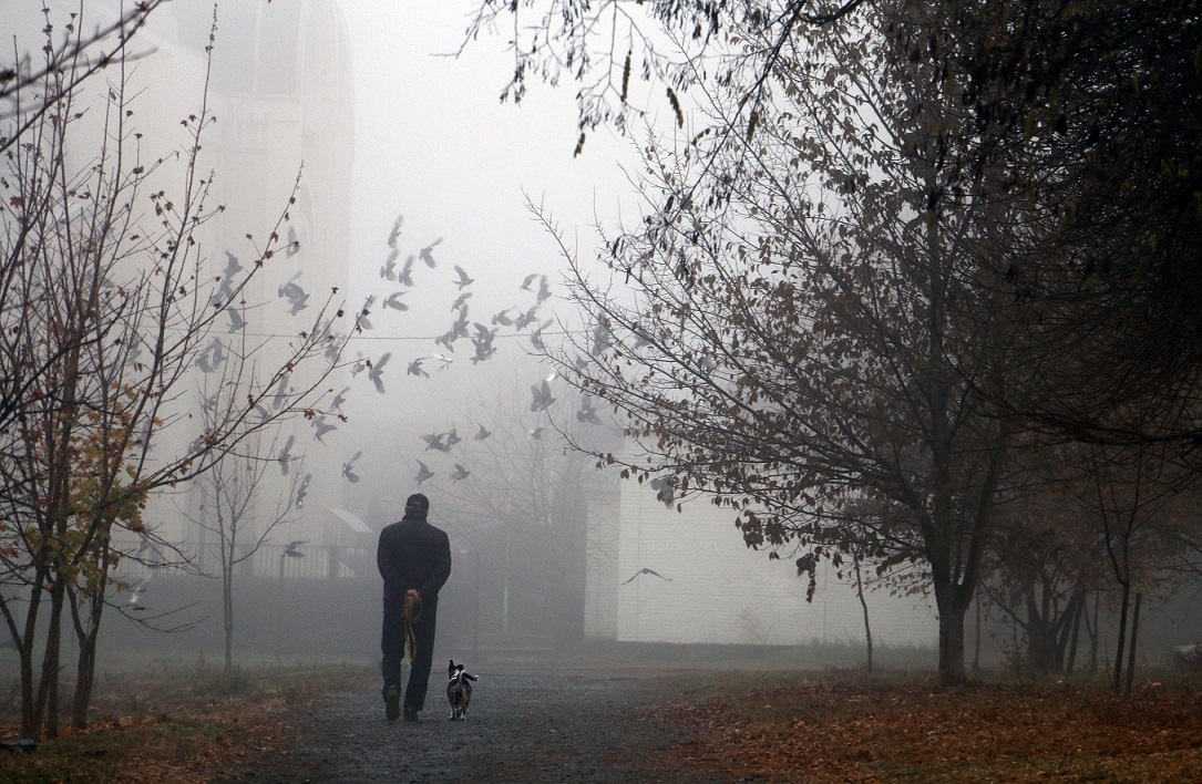 Man walking his dog dealing with chemo brain fog.